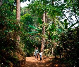 Doi Pui Trail